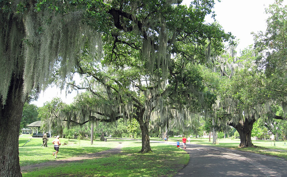 Audubon Park And The Fly Experience New Orleans