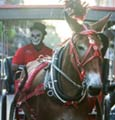 History & Haunts Carriage Tour